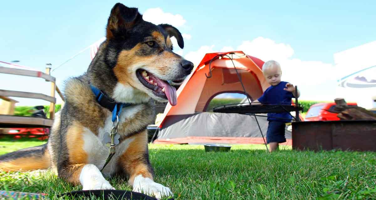 hond op camping met kind