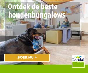 ontdek de beste hondenbungalows banner